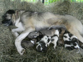 Suade with her newborn pups in April